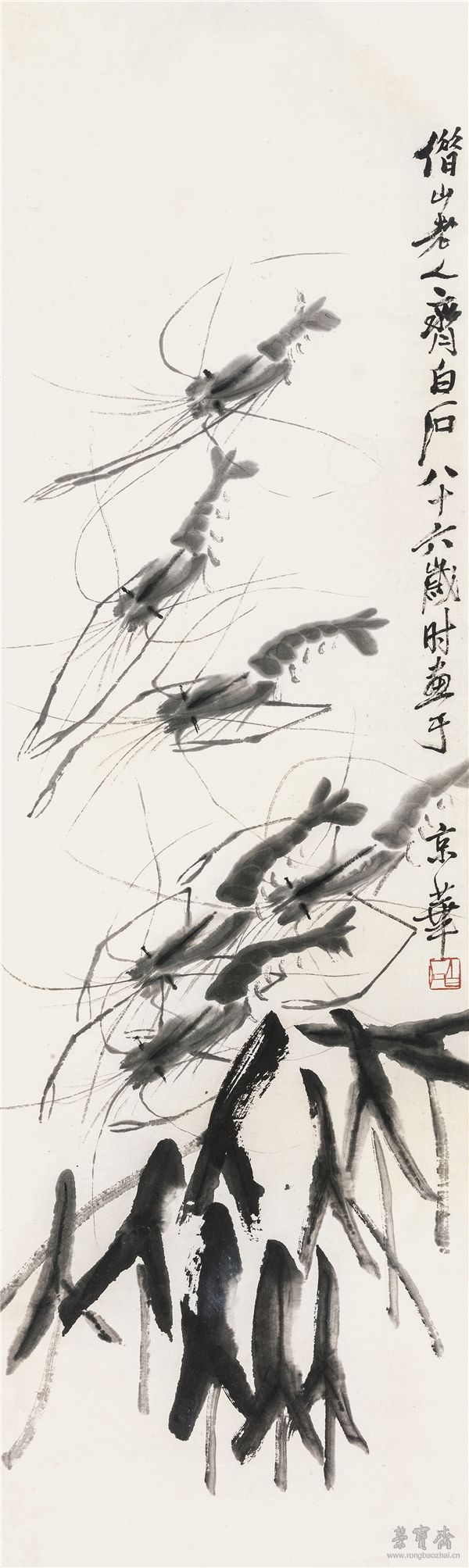 生物虾结构示意图